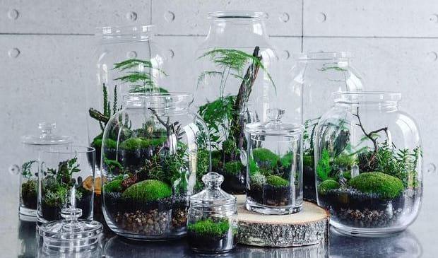 Super tiny forest vibe bottle